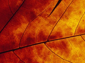 Leaf pigments can be separated using chromatography.