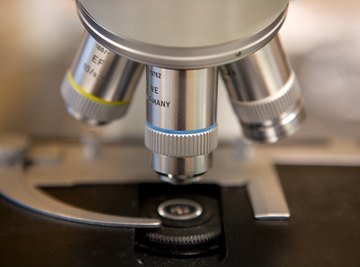 The revolving nosepiece of a microscope allows the user to change magnification.