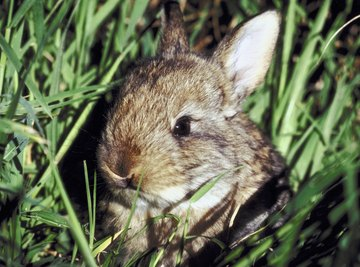 Rabbits live in forests, meadows, thickets and grasslands.