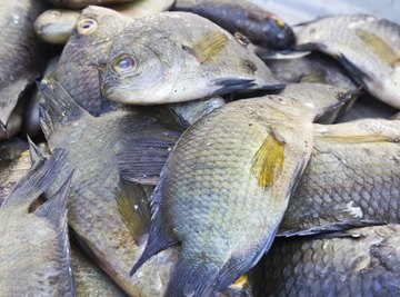 Tilapia for sale at a market.
