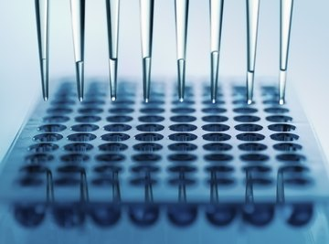 The Importance of Studying Human DNA Genetics