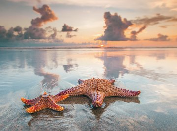 When to Get Starfish on the Beach