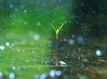 The Rain's Importance to Life on Earth