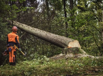Advanced Tree Felling Techniques