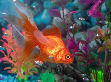 How to Turn an Aquarium Into an Ecosystem