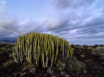 10 Organisms Living in the Desert Biome