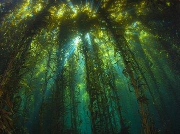 Ecological Importance of Algae