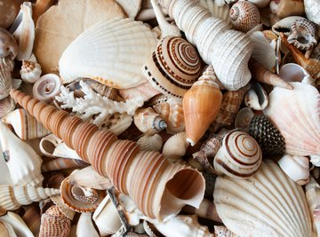 How to Get Dead Crab out of Seashells to Keep the Shells