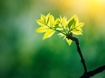 What Is the Advantage of C4 Photosynthesis