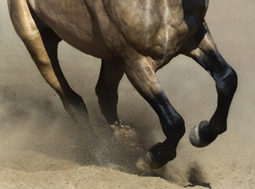 How Fast Does a Horse Run