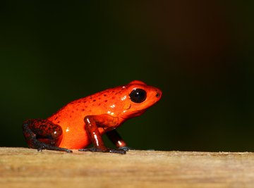 What Type of Body Coverings Do Amphibians Have