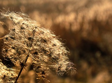 Marsh Plants & Animals