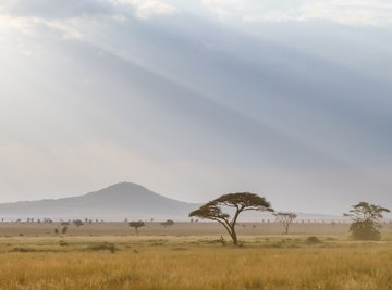 What Are the Trophic Levels in the Savanna?
