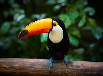 Animals in the Rain Forest That Compete for the Same Food