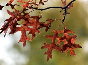 Types of Leaf Patterns