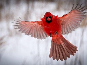 Measurements for Cardinal Birdhouses