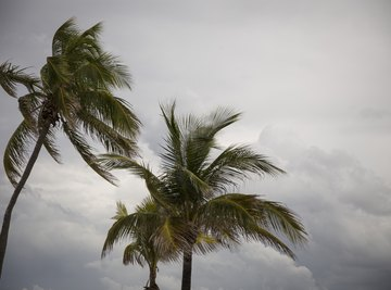 What Are the Characteristics of a Tropical Storm?