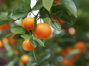 How is Fruit Formed in Plants?
