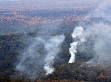 There's a scientific reason for the strength of the wildfires in Australia.
