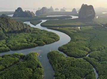 Biodiversity around the world is threatened.