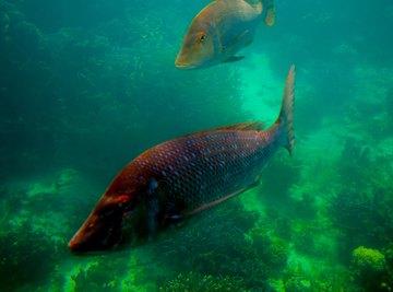 Marine Animals That Eat Plants