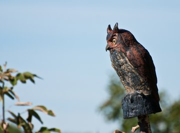 How Does a Fake Owl Work to Scare Birds Away