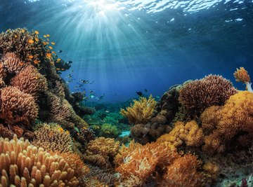 Climate change puts the world's coral reefs in danger. Here's how coral gardening can help.