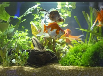 How to Raise the Alkalinity in a Freshwater Aquarium