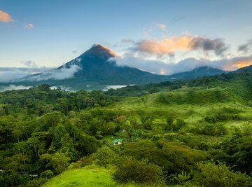 Animals & Plants in the Central American Rainforest