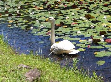 Differences Between Ponds & Oceans for Preschoolers