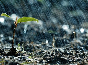 Heavy rain can, surprisingly, trigger plant stress.