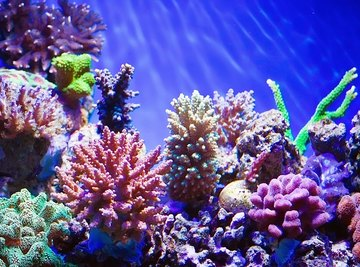 What Type of Vegetation Is Found in Coral Reefs?