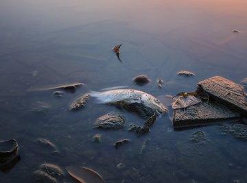 Factors Affecting Marine Life