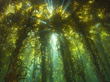 Plants That Live on the Ocean Floor