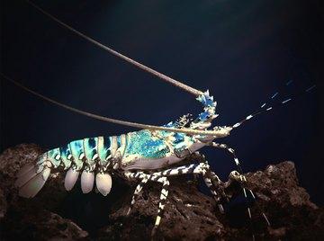 What Type of Habitat Do Shrimp Live In?