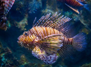 What Is the Different Between Freshwater Vs Saltwater Fish?