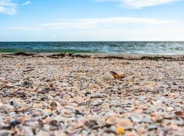 Sanibel Island, Florida Shelling Tips