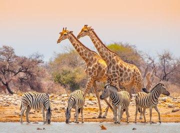 Four Types of Biodiversity