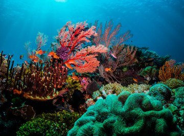 How Long Do Corals Live?