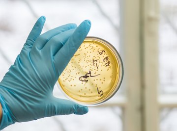 Does Hydrogen Peroxide Kill Bacteria