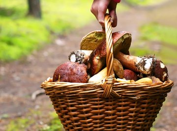 Run wild mushrooms by an expert before eating even one.