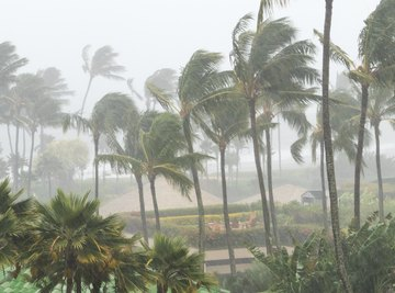 Importance of Weather Instruments