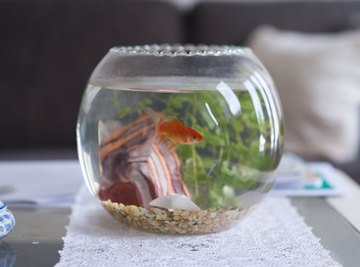 How Can pH Affect Your Fish