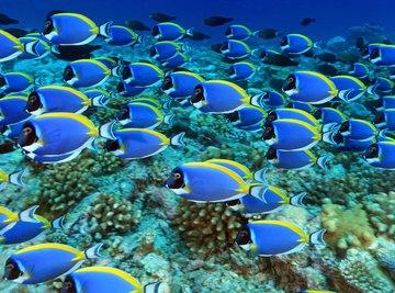 Ocean Ecosystem for Kids