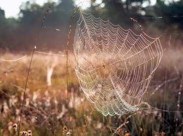 A spider knows innately how to weave its web.