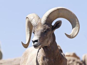 What Animals in the Desert Are Herbivores?