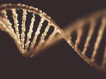 Characteristics of Nucleic Acids