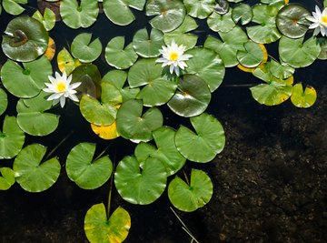 Aquatic Plants With Special Adaptive Features