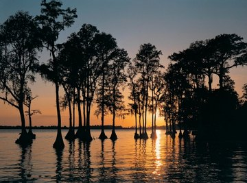 Cypress swamps are among the ecological landscapes of the Atlantic Coastal Plain.