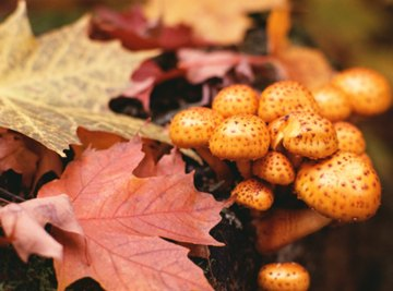 Edible Plants That Live in the Deciduous Forest